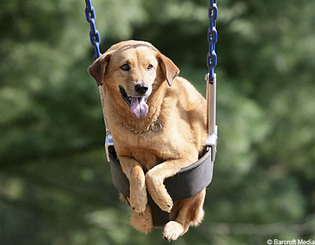 dogswing